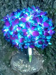 blue orchid flower 25 best blue orchid flower ideas on blue orchids