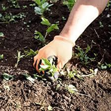 amazon com preen organic vegetable garden weed preventer 5 lb