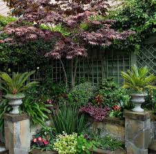 bloodgood japanese maple landscape eclectic with trellis