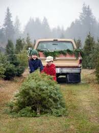 Washington Christmas Tree Farms - timber u2014a guide to local christmas tree farms in washington