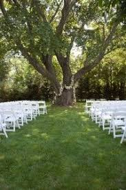 16 best tree wedding decorations images on tree