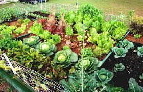 backyard home gardening for vegetables garden the best types of