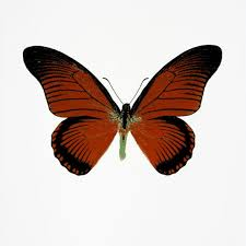 the souls i green butterfly by damien hirst hepner