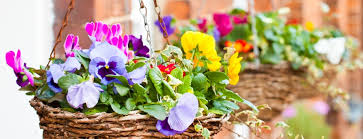 spring u0026 winter bedding plants love the garden