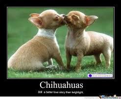 Chihuahua Meme - hispanic meme chihuahuas still better than twilight