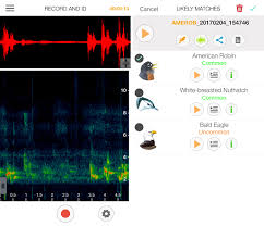 testing out song sleuth a new app that identifies birds by their