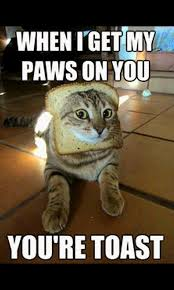 Cat Toast Meme - com daily funny best lol meme gallery appstore for android