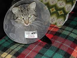 comment eviter les griffes de sur canape eviter griffes canapé awesome loisirs le topic des chats et