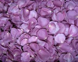 Real Rose Petals Freeze Dried Rose Petals Blush 10 Cups Of Real Rose Petals
