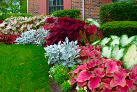 Bushes For Landscaping Landscaping Plants For Shaded Areas Ideas Designs Photo