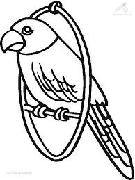 parrot coloring pages coloring pages