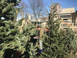 fashioned christmas tree fashioned christmas tree lot opens in pere marquette park