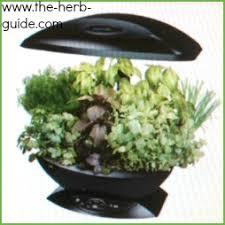 Indoor Herbal Garden Garden Design Garden Design With Cool Diy Indoor Herb Garden