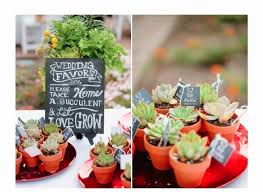 plant wedding favors bridal trends succulent wedding favors buffalo weddings