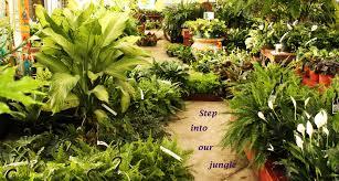 the best indoor plants indoor plants bath garden center