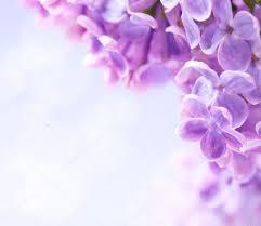 blumen lila blumen hintergrund kunst u2014 stockfoto 10486148