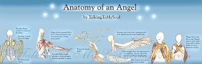 anatomy of an angel by talkingtomysoul on deviantart