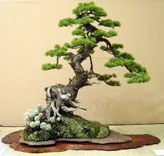 hira ぼんさい bonsai tree or plant that has been dwarfed using