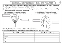 plant reproduction worksheet pack by beckystoke teaching