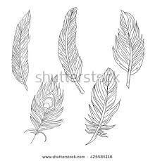 easy outlines set 5 different kind bird feathers stock vector 425585116
