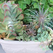 Soil Mix For Container Gardening - succulent planter bowl an example of a good succulent soil mix is
