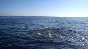 Alabama travel alone images Sharks orange beach alabama jpg