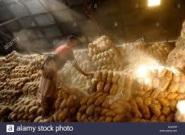 a laborer inside the jute factory in bangladesh jute naturally