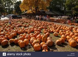 Halloween Usa Com by Halloween Pumpkin Sale At Farm Market Ny State Usa Stock Photo