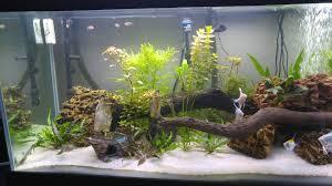 ship in a fish tank 272872