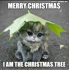 Tree Meme - 50 best funny christmas memes happy wishes