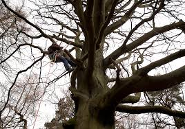 standard bs 8596 2015 surveying for bats in trees and