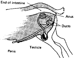 Goat Eye Anatomy The Strange Circle In Kidney Channel Acupuncture Channel System