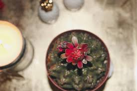 bohemian coffee table details u2013 sara ashouri