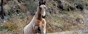 save the brumbies caring for australia u0027s wild horses