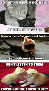 Fat Cat Meme - i can has cheezburger fat funny animals online cheezburger