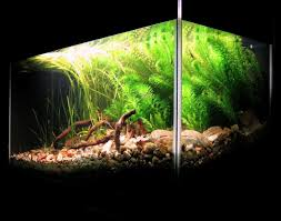 aquarium aquascape designs aquascape pond okc pools