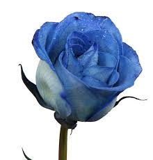 balloon delivery wichita ks blue dyed roses br local delivery only from your local wichita