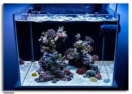 Floating Aquascape Reef2reef Saltwater And Reef Aquarium Forum - 63 best reef t u0027ings images on pinterest reef aquarium aquarium