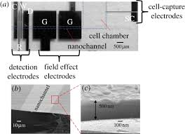 nanocapillary electrophoretic electrochemical chip towards