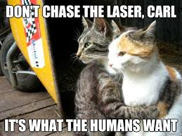 Cat Alien Meme - restraining cat weknowmemes generator