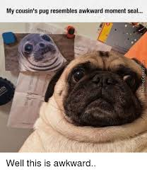 Awkward Seal Meme - my cousin s pug resembles awkward moment seal well this is awkward