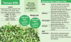 Teh Arab bnn panen 1 hektare khat di puncak jenis narkotika teh arab