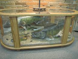 Display Coffee Table Coffee Table Fish Mount Dan U0027s Wildlife Creations Taxidermy Studio