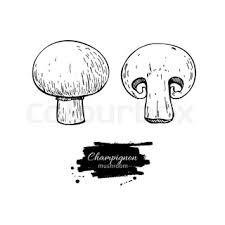 champignon mushroom hand drawn vector illustration sketch food