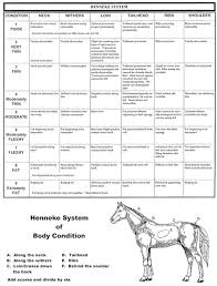 the abcs of equine nutrition the letter b the equine nutrition nerd