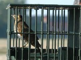 uccelli in gabbia consigli per un bel canto degli uccelli beretti
