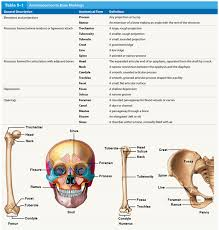 Human Anatomy Quizes Anatomy Quiz Bone Markings Anatomy And Physiology