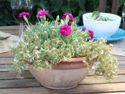 decor drought tolerant ornamental grasses and drought tolerant