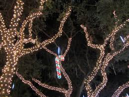 palm harbor christmas lights copeland christmas blog christmas lights in snug harbor estates