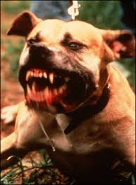 Seeking Pitbull Episode Dangerous Dogs Esl Resources